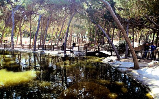 Reina Sofia Park