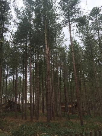 Landscape - Forest Holidays Sherwood Forest Photo