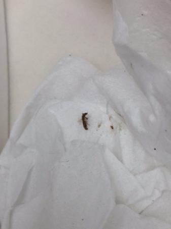 Los Abrigados Resort and Spa : bed bug