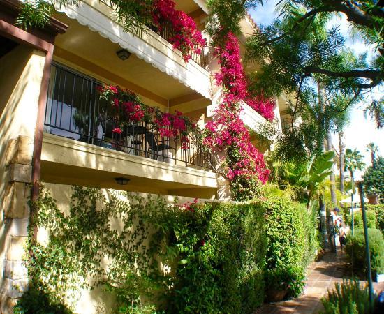 Hotel Pepper Tree : Garden Walkway