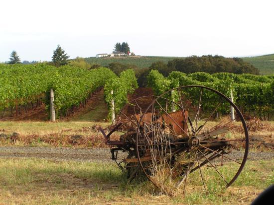 Monroe, Oregon: Vineyard