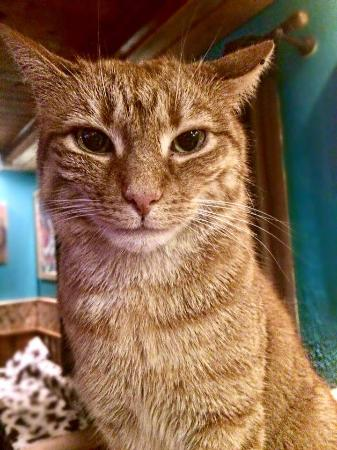 La Vache : In-house cat 'derrick'