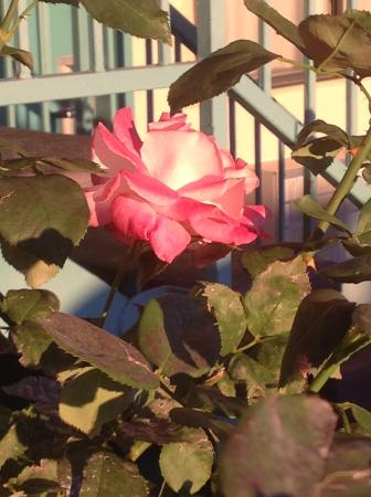 Americas Best Value Inn Show Low: So sweet to wake up to roses