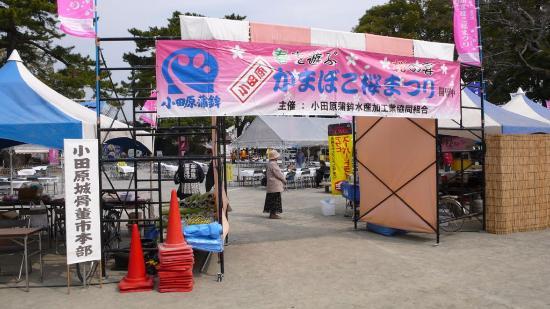 Odawara Cherry Blossom Matsuri