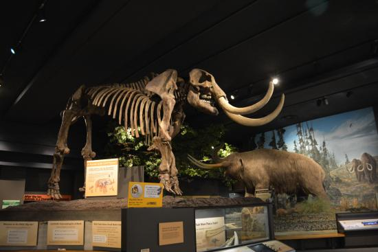 A Mastodon Picture Of Rochester Museum Science Center Rochester