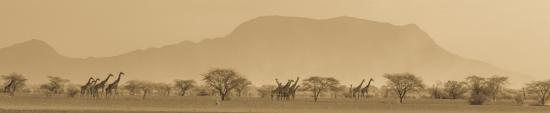 Magadi, Kenya: Giraffe & Mt. Shompole