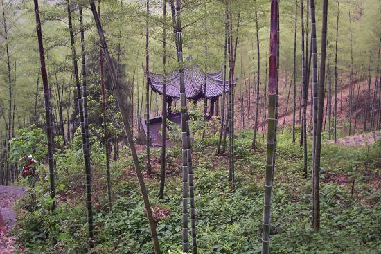 Jiangshan, Cina: Pavilion in the bamboo forest