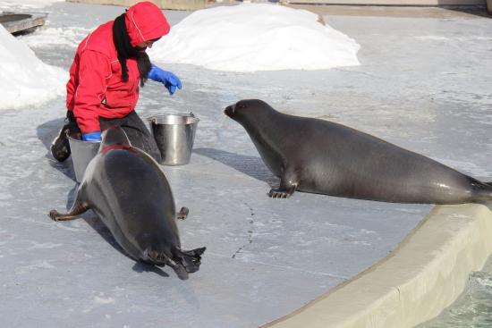 Aquarium du Quebec : L'heure du repas des phoques