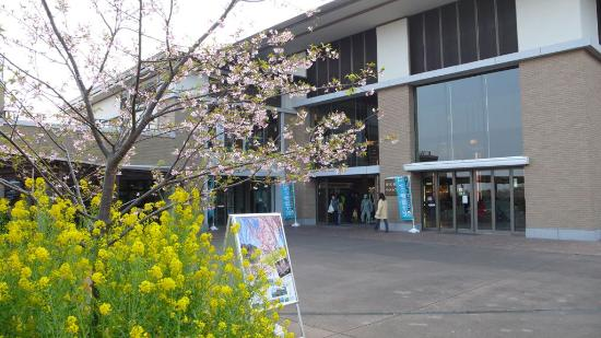 Izu Kogen Cherry Blossom Festival
