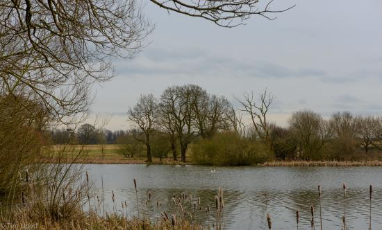 Coventry, UK: View from the hide
