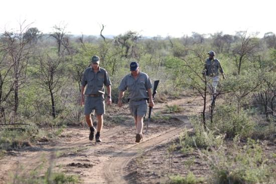 Impodimo Game Lodge: Rangers will track the animals away from the Land Rover