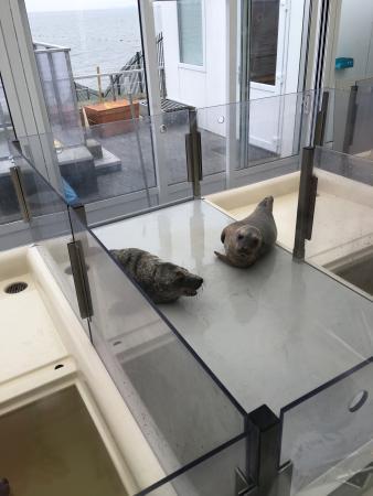 A Seal Zeehondenopvang en Expo Stellendam