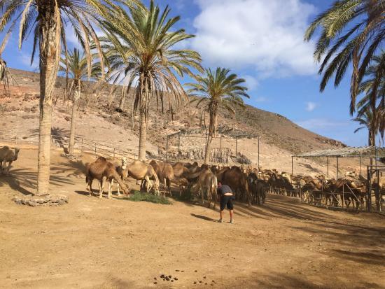 flamingi - Picture of Oasis Park Fuerteventura, Fuerteventura - TripAdvisor