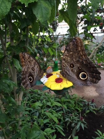 Lunchtime picture of la serre aux papillons la queue for Attraction yvelines