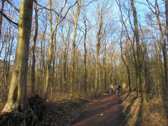 fietspad tussen oude beuken en eiken de route tussen Heiloo en Alkmaar
