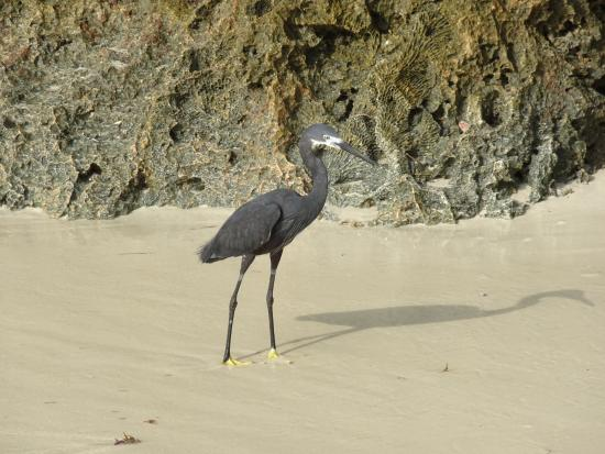 Chumbe Island Coral Park: Bird on the beach