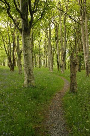 RSPB Loch Gruinart Reserve : Woodland path through the Loch Gruinart Nature Reserve