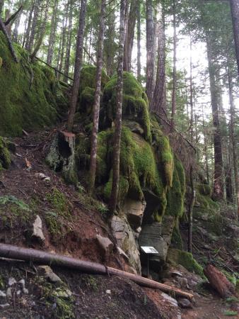 Horne Lake Caves Provincial Park: photo2.jpg