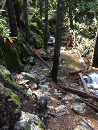 Horne Lake Caves Provincial Park: photo3.jpg