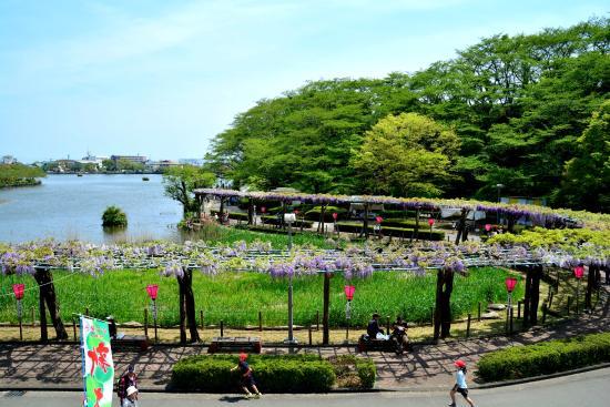 Rengejiike Park Fuji Festival