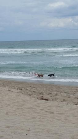 Jensen Beach, Флорида: Walton Rocks Beach/ Dog Park