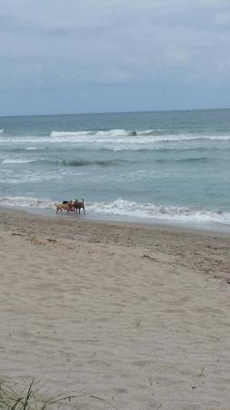 Jensen Beach, FL: Walton Rocks Beach/ Dog Park