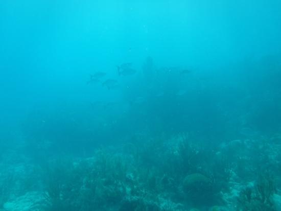 Amy Slate's Amoray Dive Resort: .