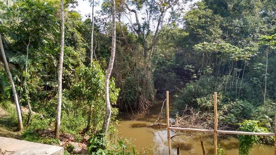 Amazon Rainforest Lodge: Ingresando al albergue