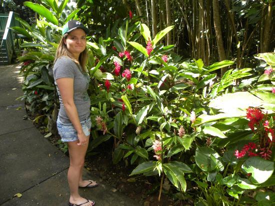 Kilauea, HI: beautiful foliage