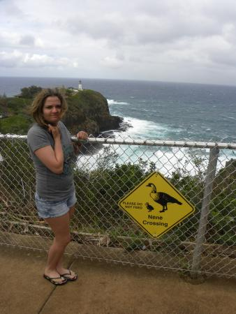Best of Kauai Tour: Nene Crossing at the Lighthouse area