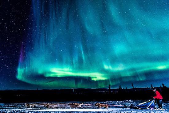 Arctic Winter Adventures