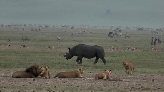 F. King Tours and Safaris - Day Tours: Black Rhino, Lion Pride, Zebras, Wildebeests, Impalas, Gazelles...all in one shot