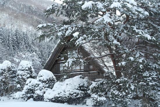 Shirakawa go - Picture of Shirakawago Gassho Zukuri Minkaen, Shirakawa-mura -...