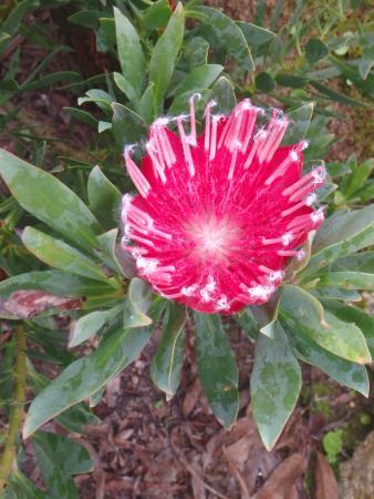 La plus belle fleur du parc picture of jardin exotique et botanique de roscoff roscoff - Photo de jardin exotique ...