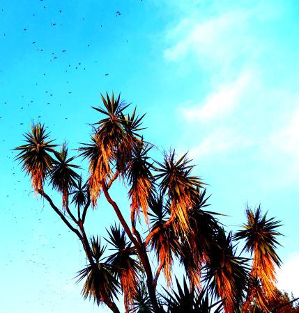 Casitas Maraika: palms