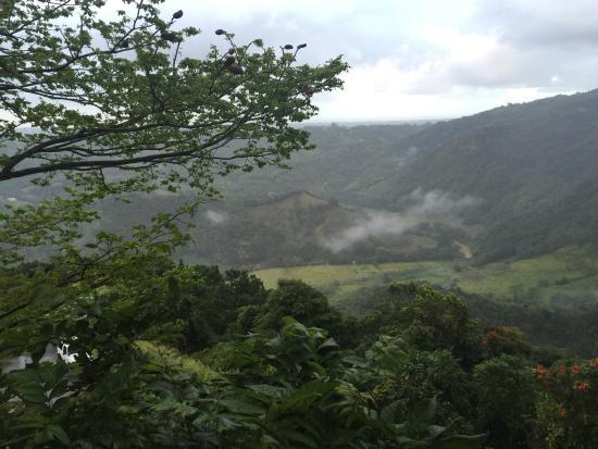 Morovis, Puerto Rico: photo7.jpg