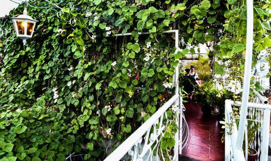 Roy's Terrace Inn