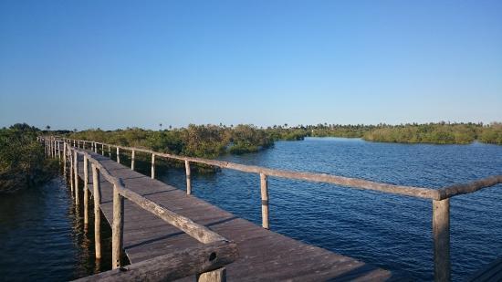 Bay View Lodge: Mangrovenfleder