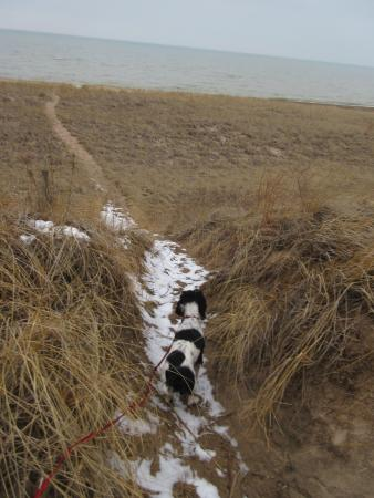 Beverly Shores, IN: dog on the beach