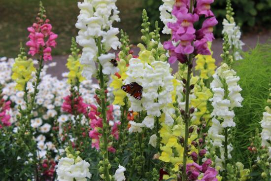 Λουντ, Σουηδία: Botanical Gardens (Botaniska Tradgarden) Lund. Sweden