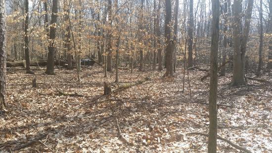 Turkey Swamp Park: Solitude