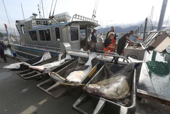 Alaskan Fishing Adventures Accommodation : Unloading the Tia' Rose after an Overnighter!