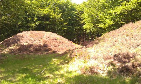 Struer, الدنمارك: Dette er kun en lille del af en gruppe bronze alder(ca.1500 f.Krist.) der ligger syd for Hurup t