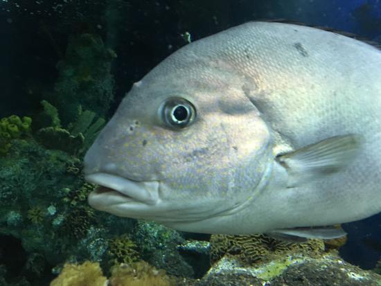 Photo1.jpg: Fotografía De Bristol Aquarium