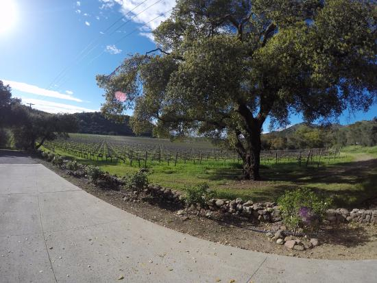 Robinson Family Vineyards