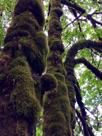 Hood River, OR: Mmmmm, mossy!
