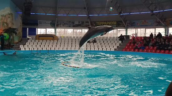 Nemo Dolphinarium