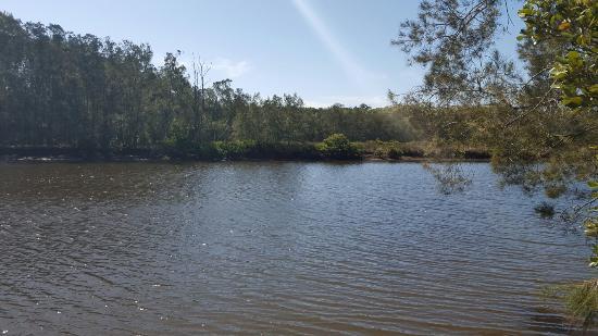 Woollamia, Australia: 20160304_144647_large.jpg