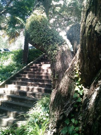 Emily Place Reserve: Steep stairways