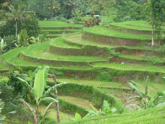 easyGO Classic Jeep Adventure Day Tour: UNESCO protected site (Rice terraces)